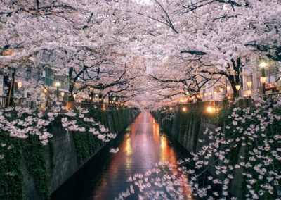 Japan_Cherry-Blossoms_GettyImages-179989245